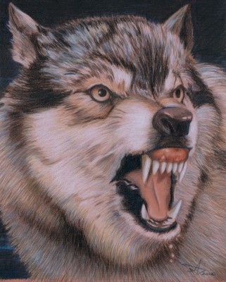 """Beast of Prey Wolf"" 2012, Buntstift, Wachsstift, Fettstift auf Paier, 55x45cm"