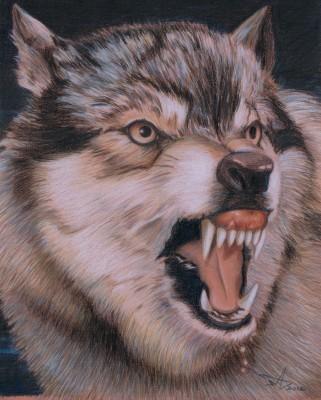 """""""Beast of Prey Wolf"""" 2012, Buntstift, Wachsstift, Fettstift auf Paier, 55x45cm"""